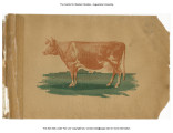 """Official Souvenir Programme: Seventh Annual Meeting of the National Creamery Buttermakers'..."
